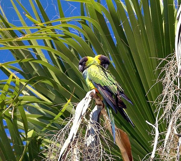 birds-on-tree- (13)