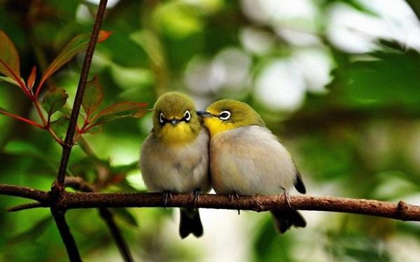 birds-on-tree- (21)