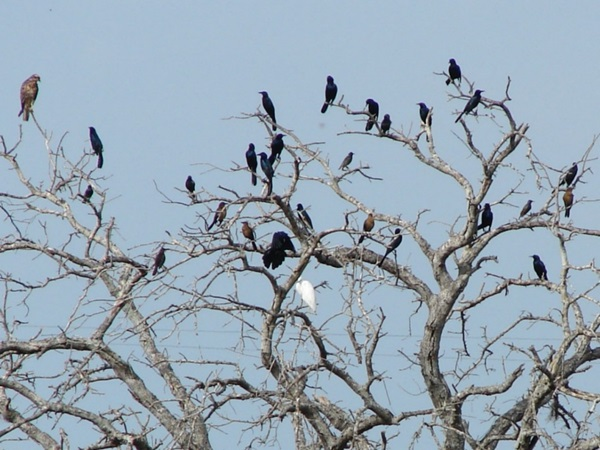 birds-on-tree- (6)