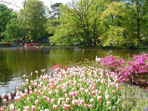 colorful-tulip- (19)