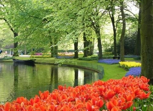 colorful-tulip- (20)