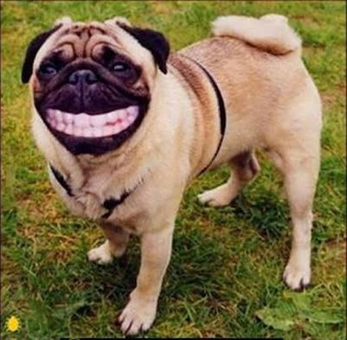 funny-dogs-pictures- (7)