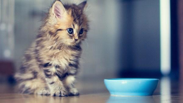 kitten-wallpaper- (14)