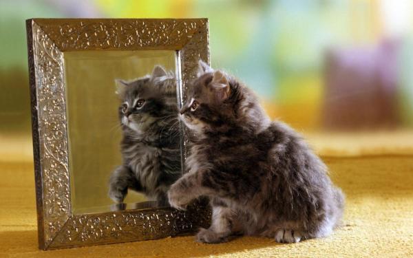 kitten-wallpaper- (8)