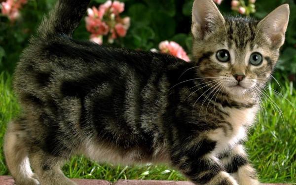 kitten-wallpaper- (9)