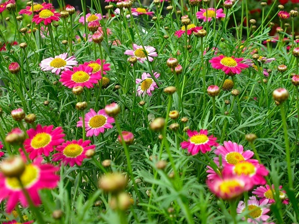 most-beautiful-flowers-40-photos- (16)