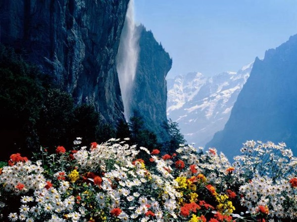 most-beautiful-flowers-40-photos- (22)