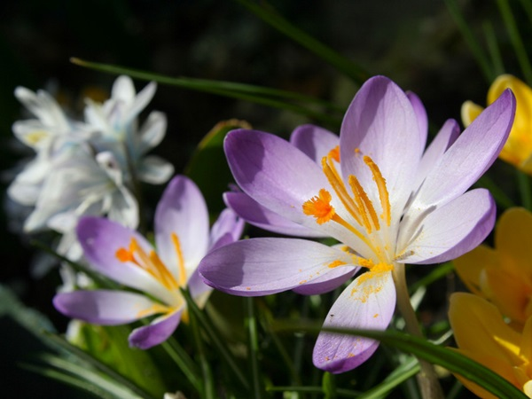 most-beautiful-flowers-40-photos- (23)