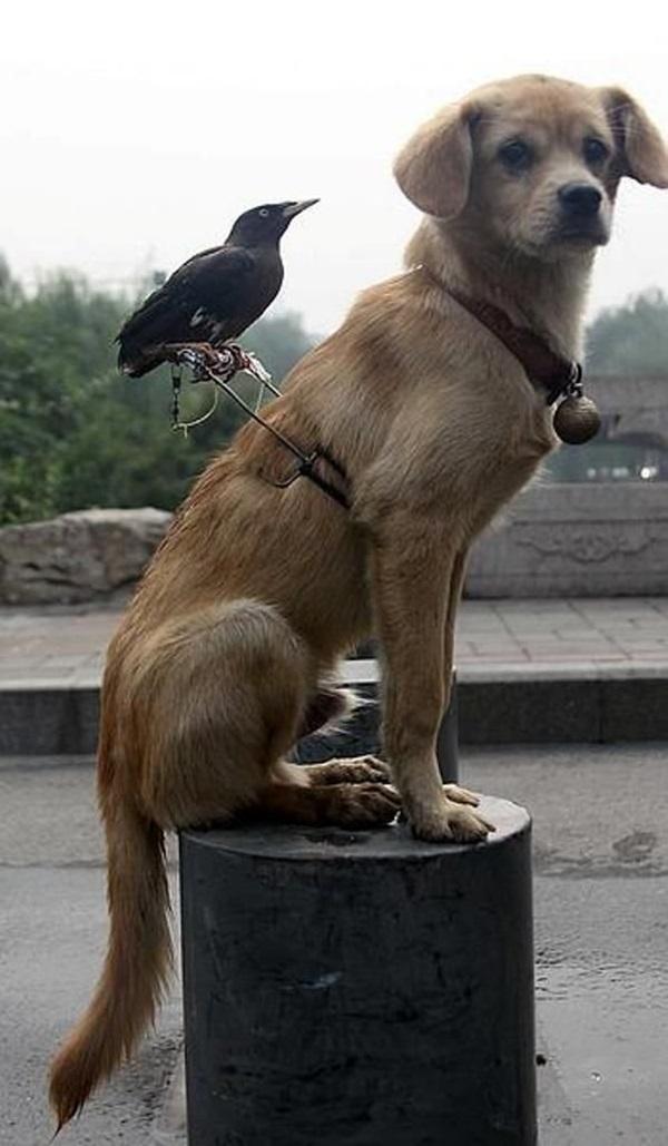 unusual-animal-friendship- (17)