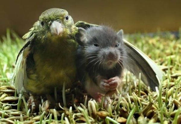 unusual-animal-friendship- (2)