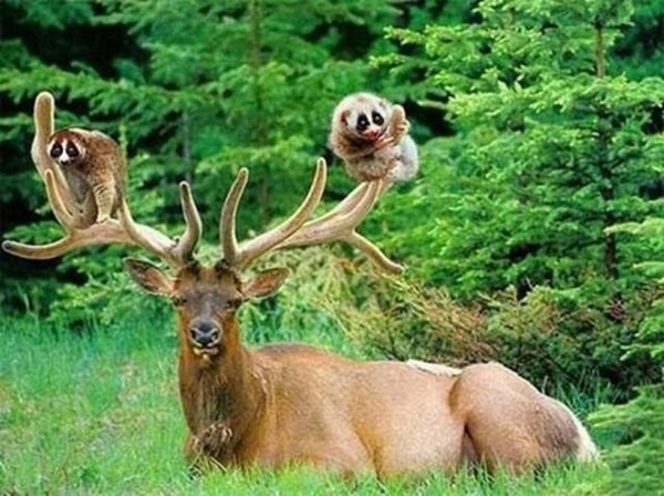 unusual-animal-friendship- (22)