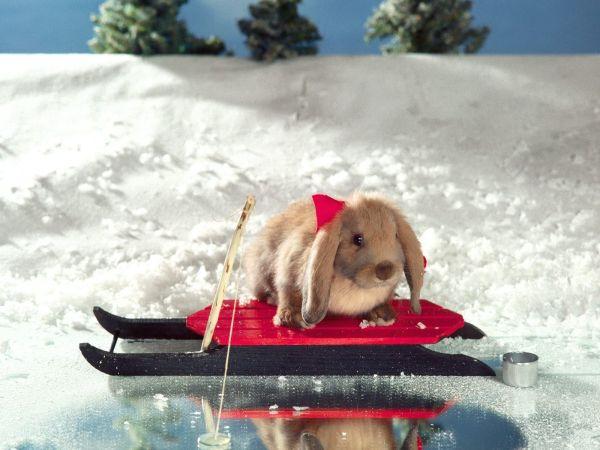 bunny-photos- (4)