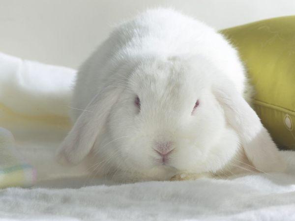 rabbit-pictures- (1)