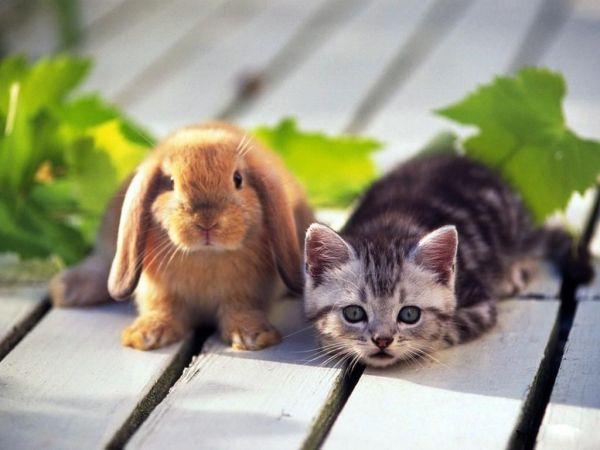 rabbit-pictures- (3)