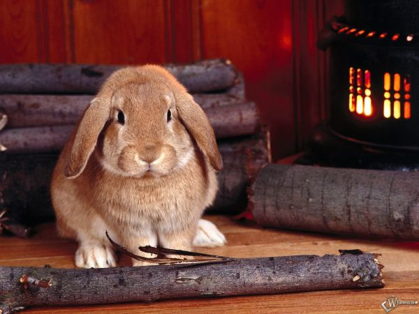 rabbit-pictures- (5)