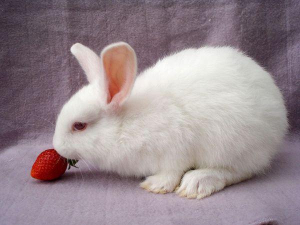 rabbit-pictures- (6)