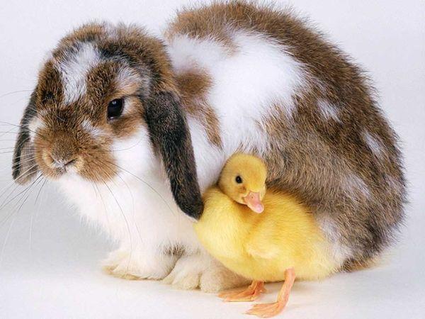 rabbit-pictures- (7)