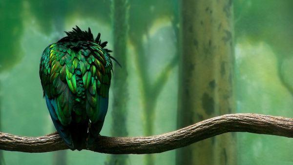 beautiful-birds-pictures-10-wallpaper- (5)