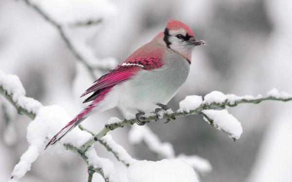 beautiful-birds-pictures-10-wallpaper- (9)