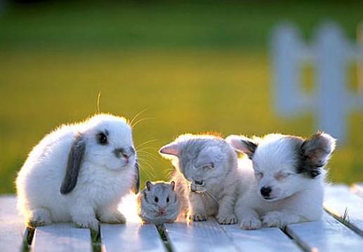 https://i2.wp.com/www.funny-potato.com/blog/wp-content/uploads/2007/10/cute-animals.jpg