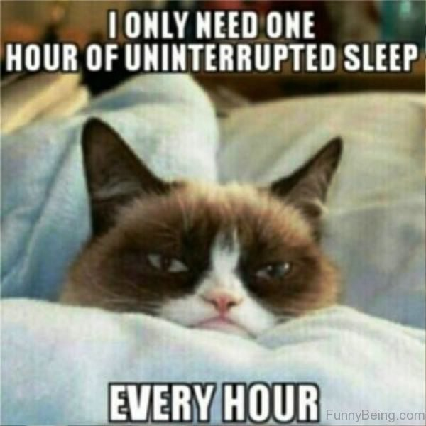 All I Want To Do Is Sleep Cat Meme Cat Planet Cat Planet