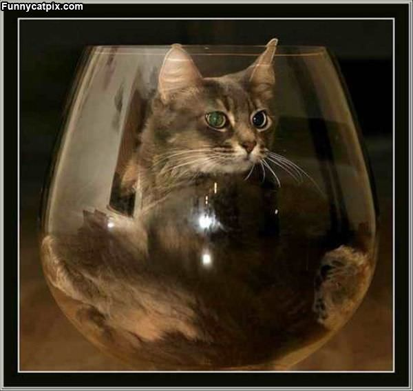 Glass Of Cat