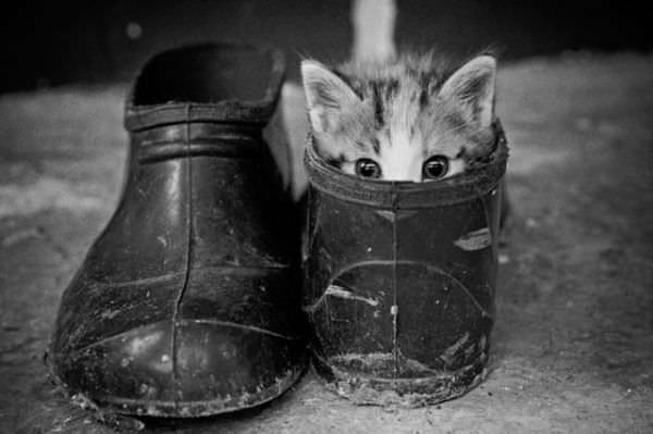 Peeking Out Of My Boot