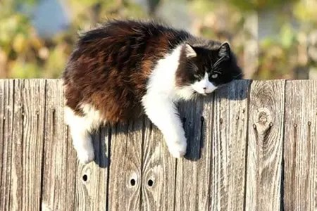 Cat laying across top of wooden fence