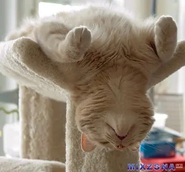 Cat sleeping upside down on cat climber