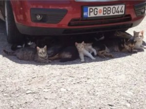 Cats cooling off in car shade