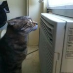 Cat cooling off by an air conditioneer