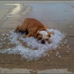 Hot dog on ice