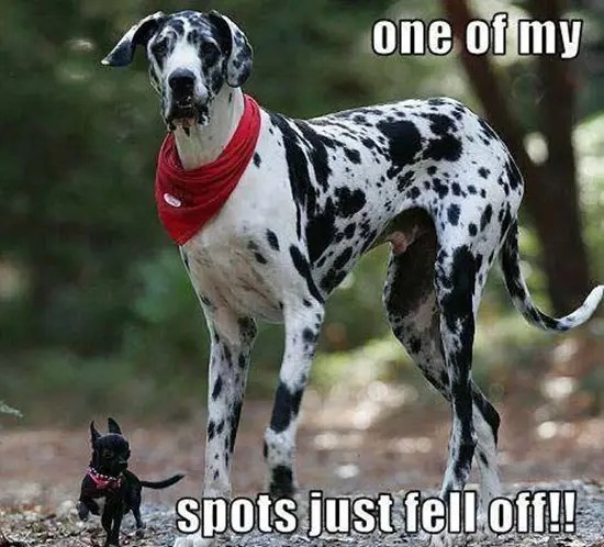 A dog lost his spots
