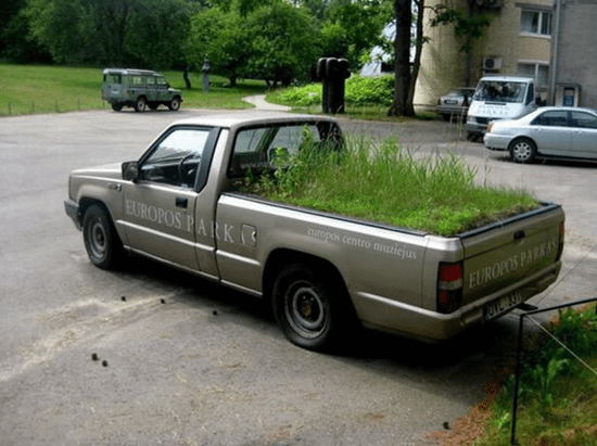 Grass planted in bed of truck