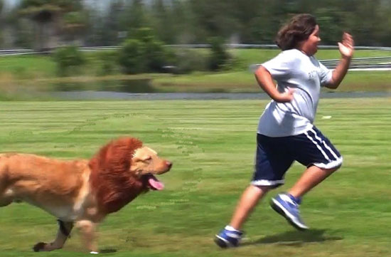 People mistaken dog for lion. Hilarious!!!