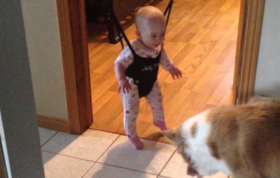 This cute dog tries to teach a baby to jump! Adorable.