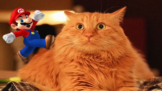 "This funny cat is scared of ""Mario"" jumping sound… LOL"