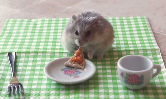 This video of a tiny hamster in a tiny mansion is so adorable. :)