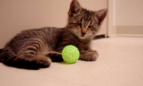 This Blind Kitten Was Just Given a Toy for The First Time in His Life. What Followed Is So Touching