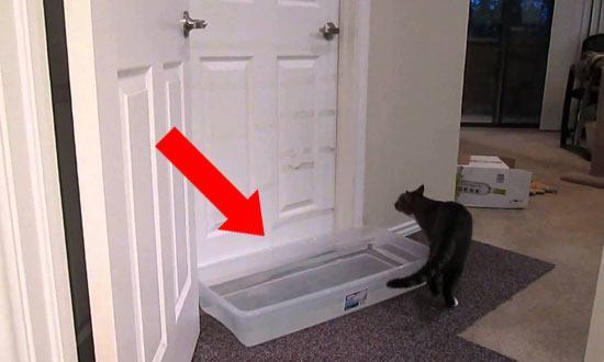 I Had No Idea Why He Put Water in Front of The Door. but Watch What happens… WOW!