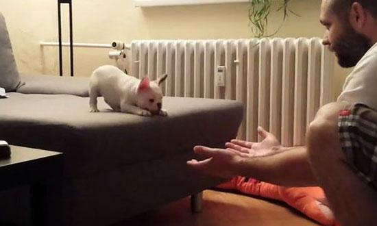 You're gonna want to see what this adorable puppy is about to do… Trust me!