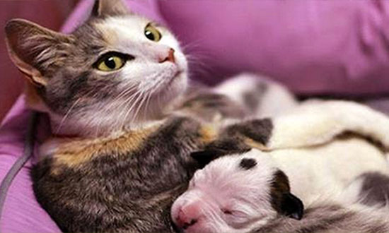 This Newborn Puppy Was Dying. but Then This Cat Did Something Unbelievable