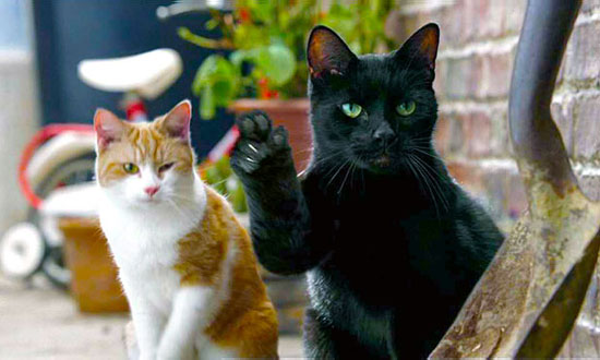 What if cats had thumbs? The world would be so different!