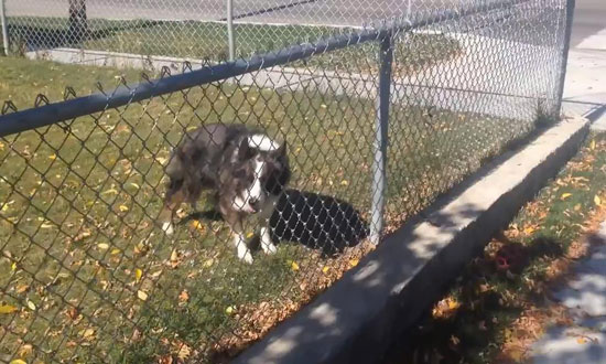 This guy tried to help a dog who couldn't get to his ball. What happened next is hilarious!