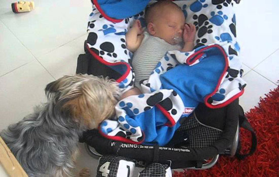 What this dog does to this sleeping baby is simply unbelievable!