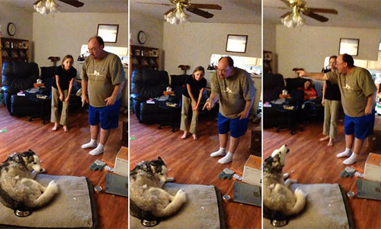 This Man's Dog Stole His Potato Skin. The Ensuing Argument Between Them Is Just Hilarious!