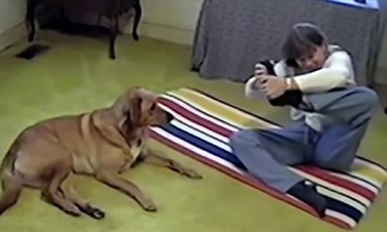 Woman Trying a Difficult Yoga Pose, Evil Dog Interrupted Her in The Best Way Possible