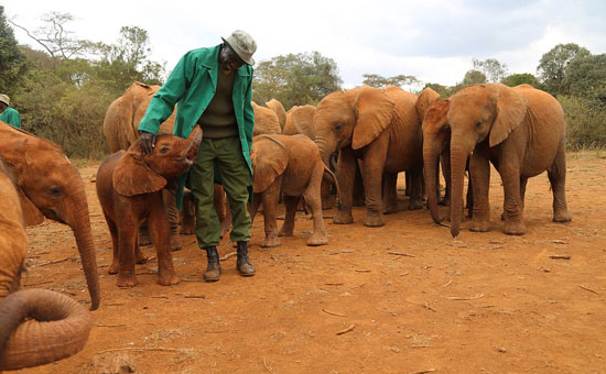 What these orphaned elephants do when they see this woman. Brought tears in my eyes!!! WOW