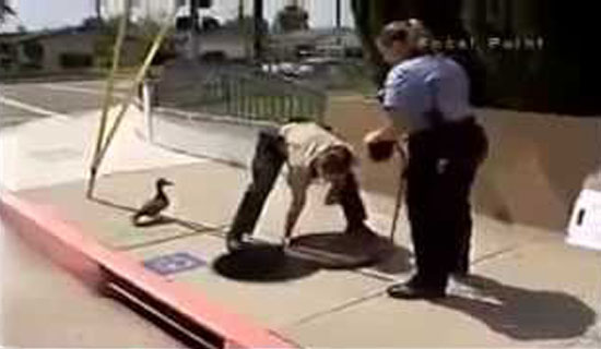This duck kept quacking until she caught a police officer's attention. Watch what happened next.