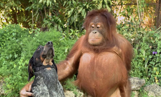 These Are The Most Unlikely Animal Friendships Ever Witnessed. They'll Make You Feel So Good Inside.